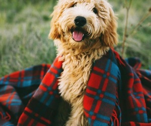 adorable, camping, and dog image