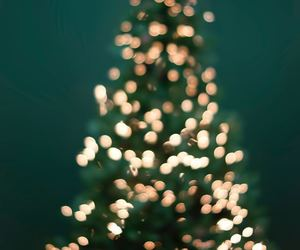 christmas, christmas lights, and christmas tree image