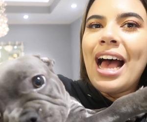 dog, youtube, and adelaine image