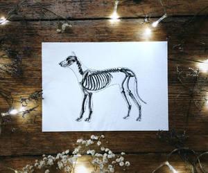 anatomy, art, and dog image