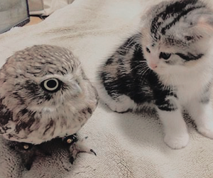 owl, cat, and animal image