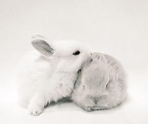 animal, rabbit, and pet image