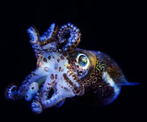 animals and marine animals image