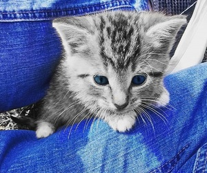 blue jeans, ble, and cat image