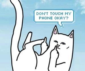 cats, Gatos, and wallpaper image