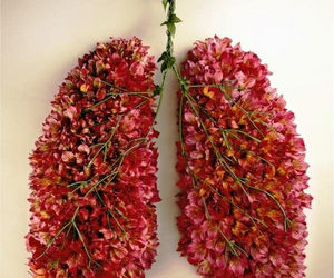 anatomy, flowers, and lungs image