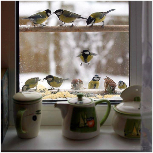 bird, winter, and window image