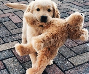best friend, dog, and cute image