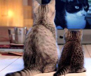 cat, tv, and kitten image