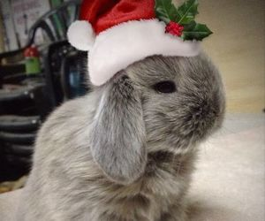 bunny, christmas, and cute image