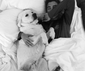 love, boy, and dog image