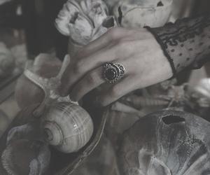 dark, gothic, and shells image