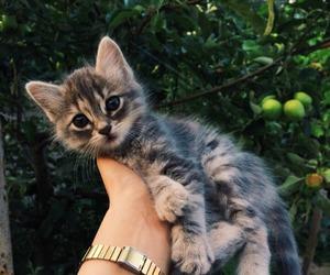 cat, animal, and tumblr image