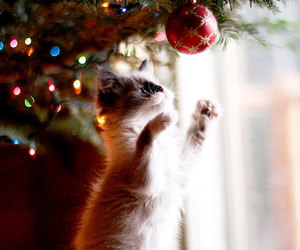 cat, christmas, and beautiful image