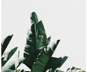 aesthetic, leaves, and plant image