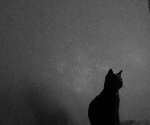 black, love, and cats image