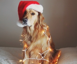 dog, christmas, and animal image