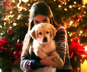 dog, christmas, and girl image