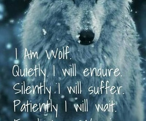 wolf, quotes, and animal image