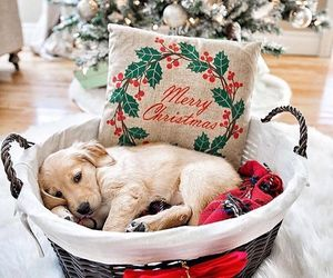 christmas, dog, and puppy image