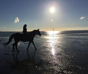 animal, horseback, and sport image