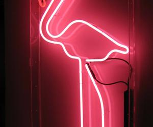 pink, neon, and flamingo image