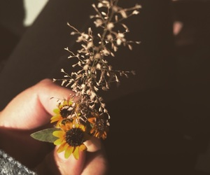 amarillo, flor, and yellow image