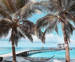 palms and beach image