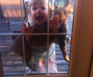 best buddies and funny cat and baby image