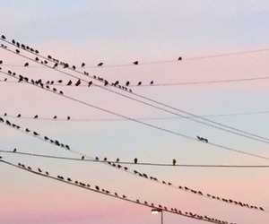 sky, pastel, and birds image