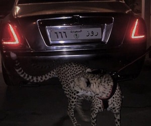 car, animal, and dark image