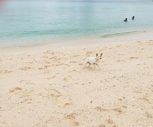 beach, beautiful, and dog image