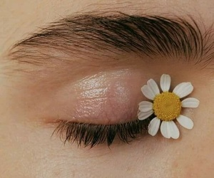 flowers, aesthetic, and eye image