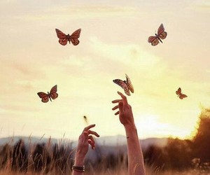 butterflies and picture image