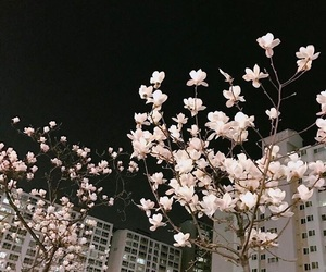 aesthetic, flowers, and night image