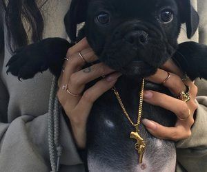 gold chain, little dogs, and cute image