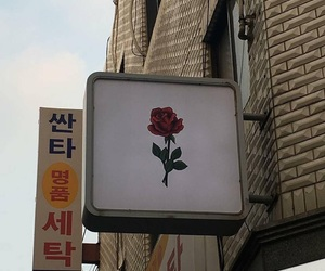 rose, aesthetic, and tumblr image
