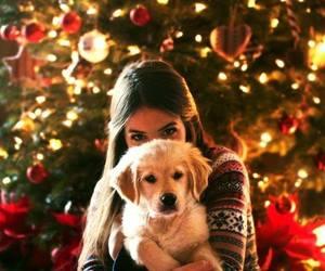 dog, christmas, and girl image