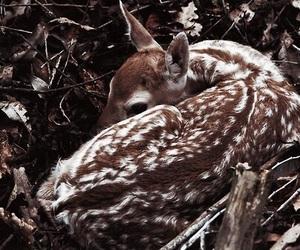 animal, deer, and brown image