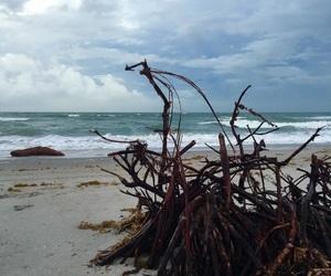 aesthetic, coast, and florida image