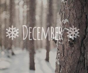 december, snow, and tree image