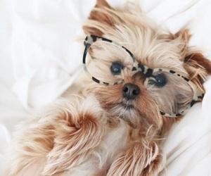 animal, cutie, and pet image