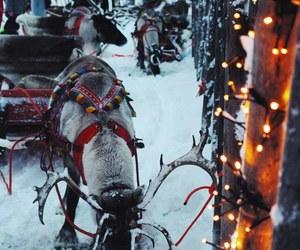 christmas, finland, and lights image