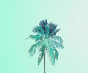 green, background, and palm image