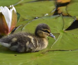 duck, flower, and pic of the day image