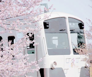 train, sakura, and asia image