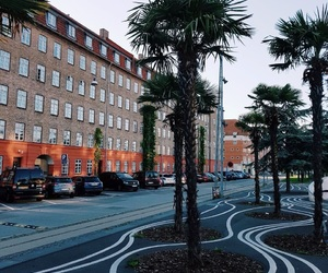 copenhagen, photography, and palm image