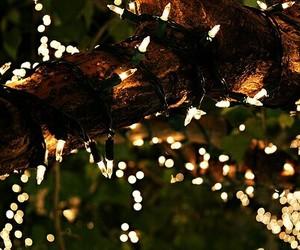 celebration, christmas, and winter image