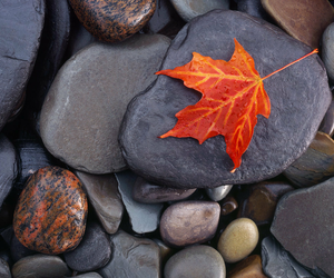 automn, fall, and rock image