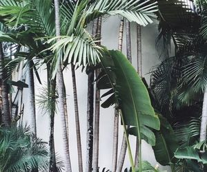 plants, green, and tropical image